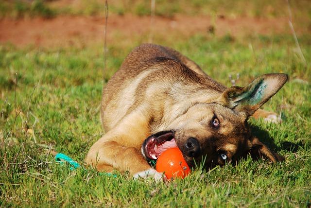 Hund Balljunkie