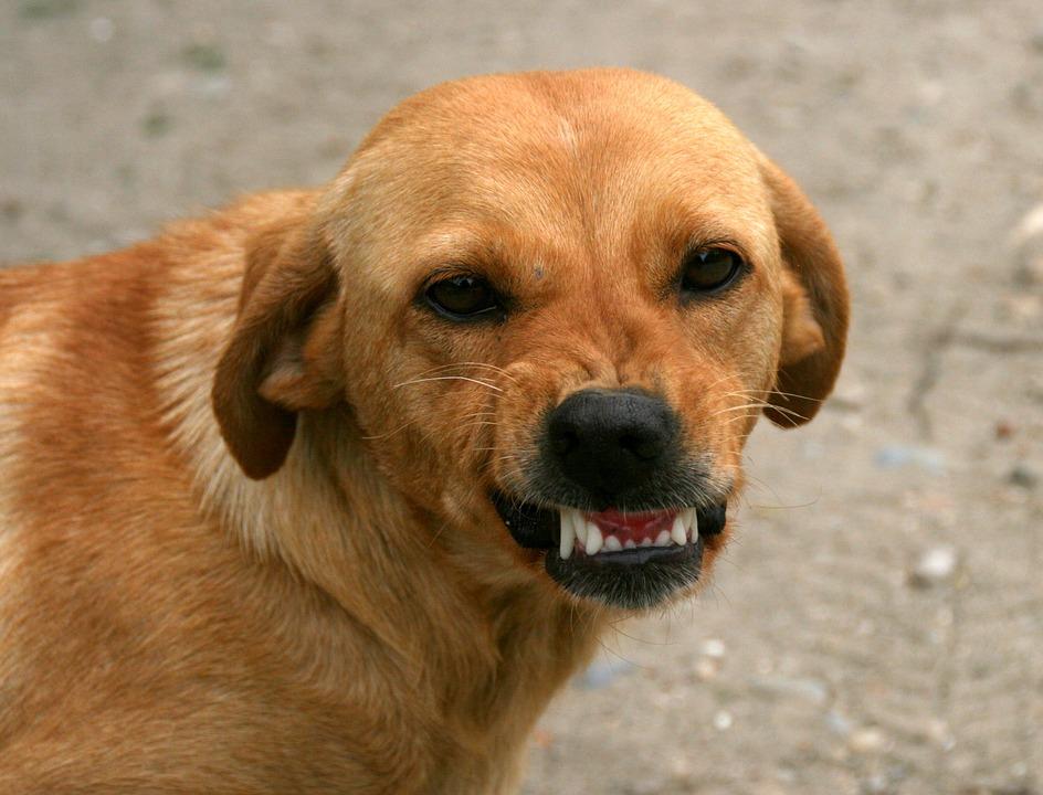 Futterneid Hund ist futterneidisch