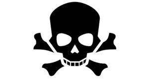 Rattengift Vergiftung Hund