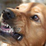 Hund aggressiv was tun