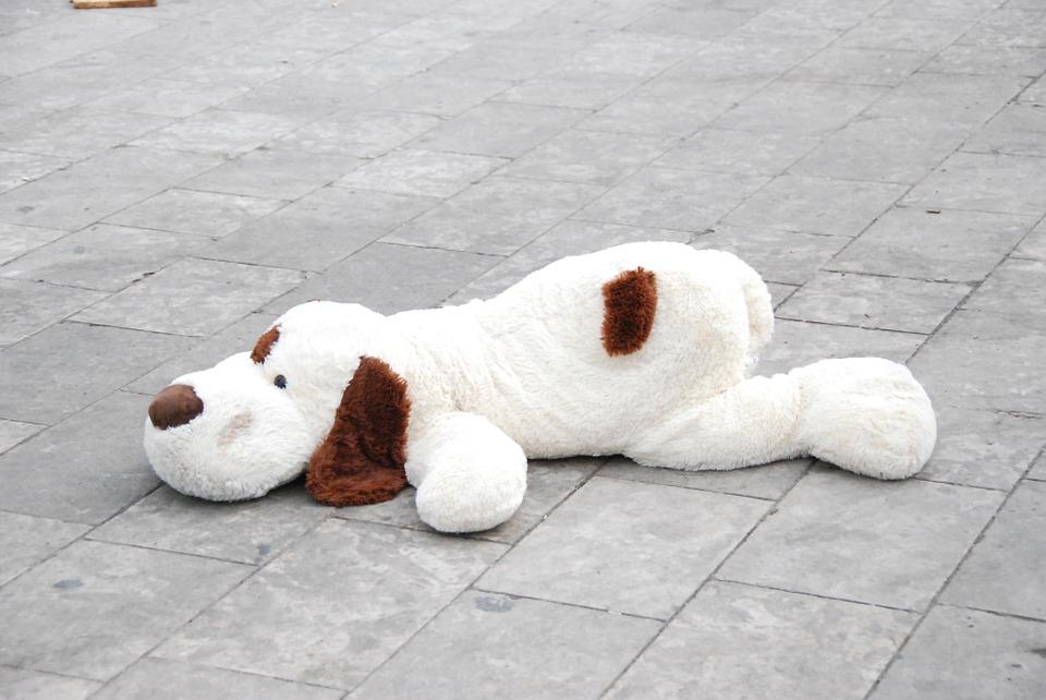 Bordsteintraining mit Hund