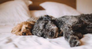 hundegeschirr selber n hen meinhund24. Black Bedroom Furniture Sets. Home Design Ideas
