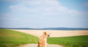Hund im Sommer Tipps
