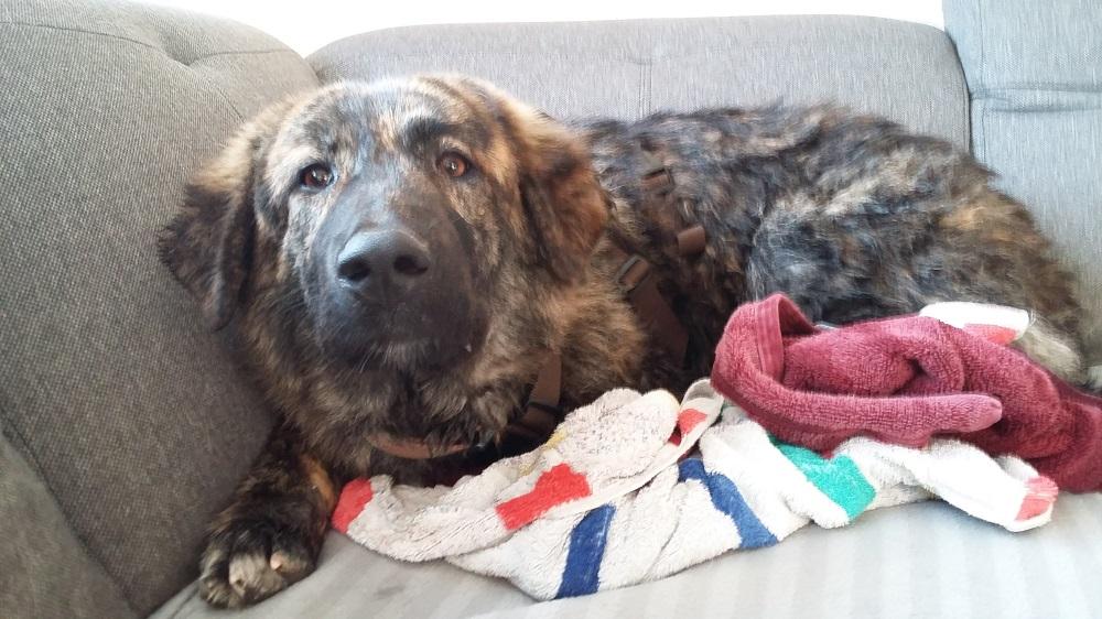 Griechenland Hund Adoption