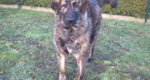 Hund aus Griechenland adoptieren