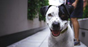 Nasenspiele Hund