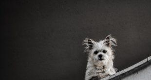 Achtsamkeit Hund
