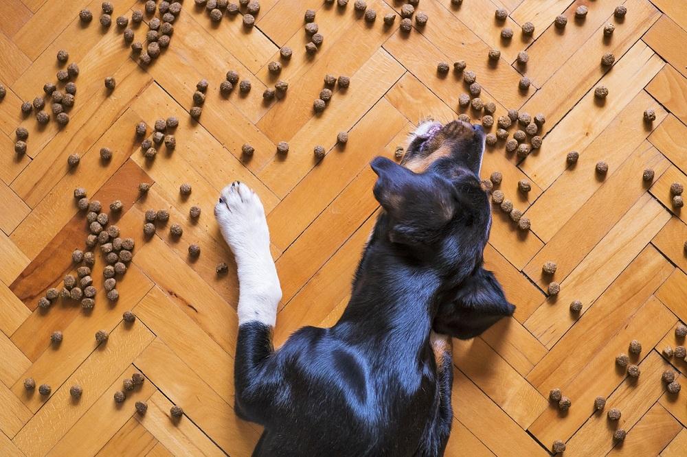 hydrolisiertes Hundefutter