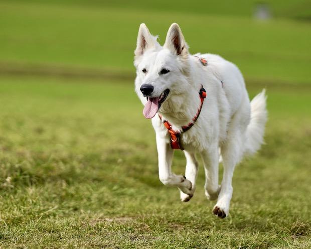 meinhund24 Charly