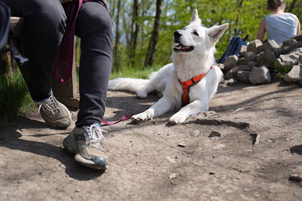 Hunde Ausstattung Ratgeber