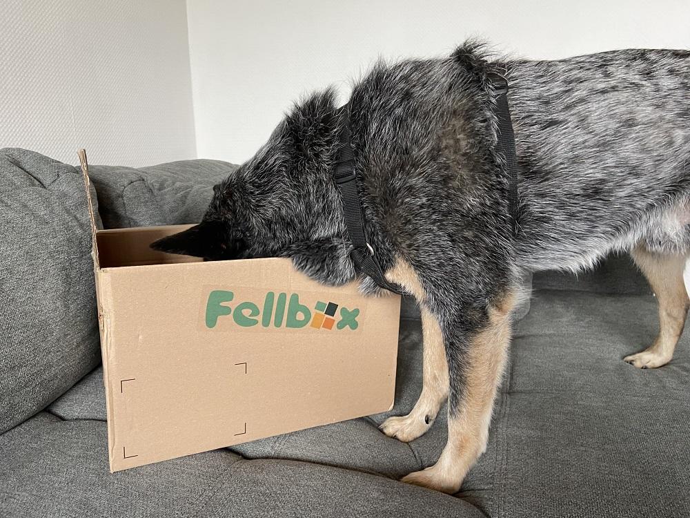 Ueberraschungspaket Hunde